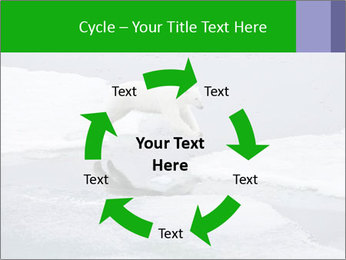 Polar bear PowerPoint Template - Slide 62
