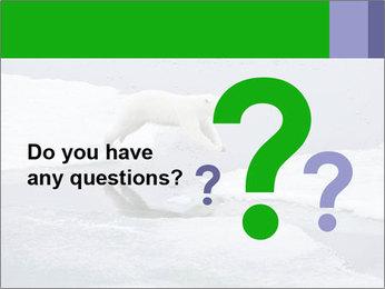 Polar bear PowerPoint Template - Slide 96