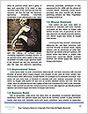 0000092807 Word Template - Page 4