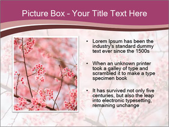 Beautiful cherry blossom PowerPoint Templates - Slide 13