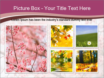 Beautiful cherry blossom PowerPoint Template - Slide 19