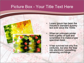 Beautiful cherry blossom PowerPoint Template - Slide 20