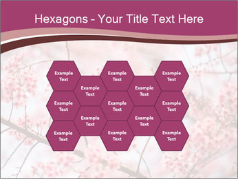 Beautiful cherry blossom PowerPoint Template - Slide 44