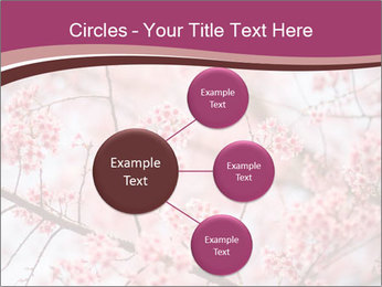 Beautiful cherry blossom PowerPoint Template - Slide 79