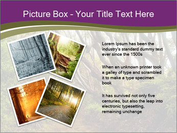 Forest Preserve Fog PowerPoint Template - Slide 23