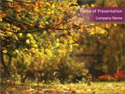 Autumn leaves PowerPoint Templates
