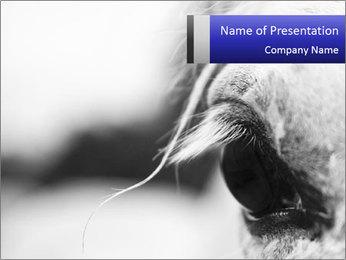 Horse'e eye PowerPoint Templates - Slide 1