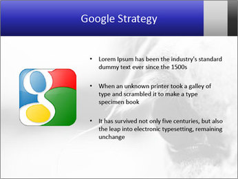 Horse'e eye PowerPoint Template - Slide 10