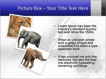 Horse'e eye PowerPoint Template - Slide 17