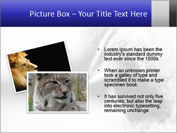 Horse'e eye PowerPoint Template - Slide 20