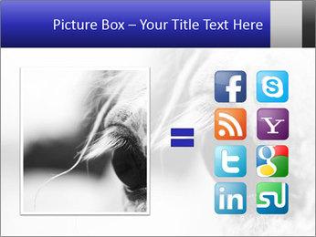 Horse'e eye PowerPoint Template - Slide 21