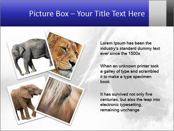 Horse'e eye PowerPoint Template - Slide 23
