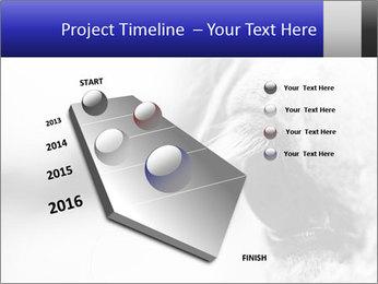 Horse'e eye PowerPoint Template - Slide 26