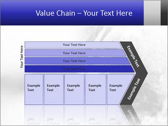 Horse'e eye PowerPoint Template - Slide 27
