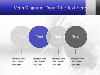 Horse'e eye PowerPoint Template - Slide 32