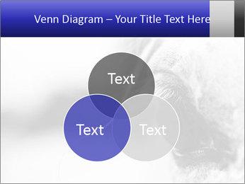 Horse'e eye PowerPoint Templates - Slide 33