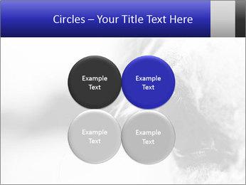 Horse'e eye PowerPoint Template - Slide 38