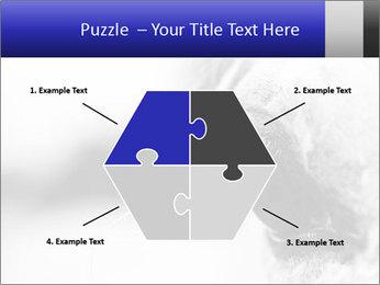 Horse'e eye PowerPoint Template - Slide 40