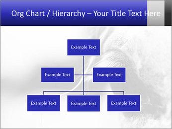 Horse'e eye PowerPoint Template - Slide 66