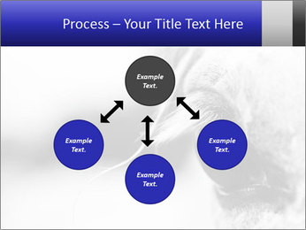 Horse'e eye PowerPoint Templates - Slide 91