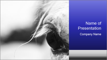 Horse'e eye PowerPoint Template - Slide 1