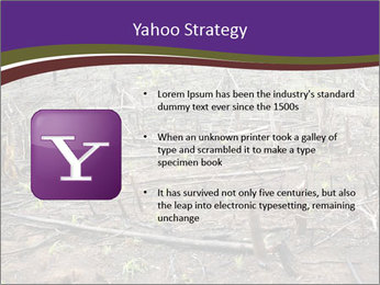 Slash and burn cultivation PowerPoint Template - Slide 11