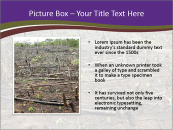 Slash and burn cultivation PowerPoint Template - Slide 13