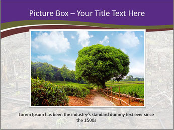 Slash and burn cultivation PowerPoint Template - Slide 15