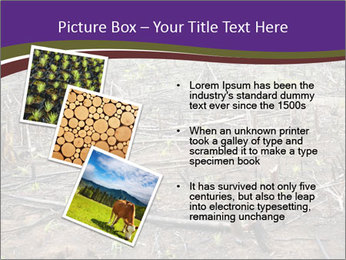 Slash and burn cultivation PowerPoint Template - Slide 17