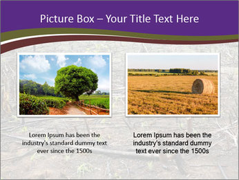 Slash and burn cultivation PowerPoint Template - Slide 18