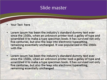 Slash and burn cultivation PowerPoint Template - Slide 2