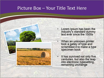 Slash and burn cultivation PowerPoint Template - Slide 20