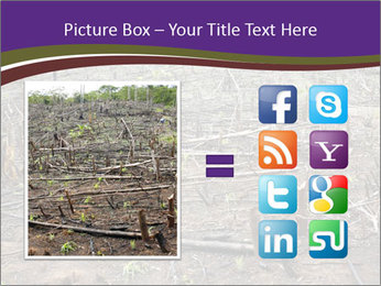 Slash and burn cultivation PowerPoint Template - Slide 21