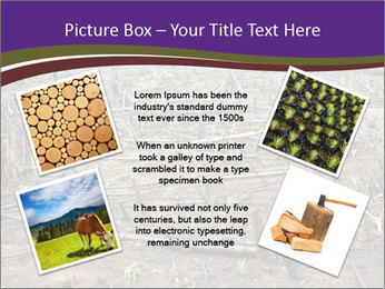 Slash and burn cultivation PowerPoint Template - Slide 24