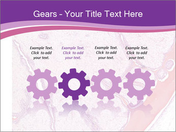 Microscope picture PowerPoint Template - Slide 48