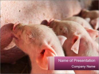 Momma pig feeding PowerPoint Templates - Slide 1