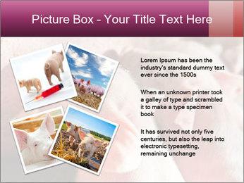 Momma pig feeding PowerPoint Templates - Slide 23
