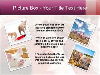 Momma pig feeding PowerPoint Templates - Slide 24