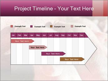 Momma pig feeding PowerPoint Templates - Slide 25