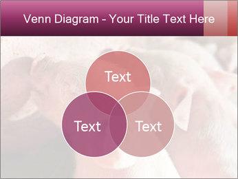 Momma pig feeding PowerPoint Templates - Slide 33