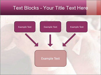 Momma pig feeding PowerPoint Templates - Slide 70