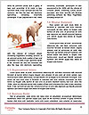 0000092932 Word Template - Page 4