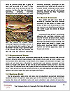 0000092954 Word Template - Page 4