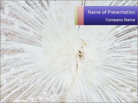 Beautiful spread PowerPoint Template