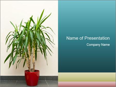 Green houseplant PowerPoint Template