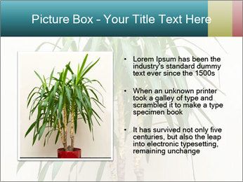 Green houseplant PowerPoint Template - Slide 13