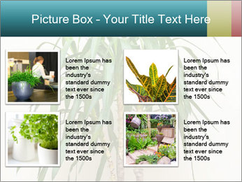 Green houseplant PowerPoint Template - Slide 14