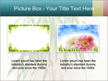 Green houseplant PowerPoint Template - Slide 18