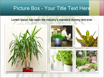 Green houseplant PowerPoint Template - Slide 19