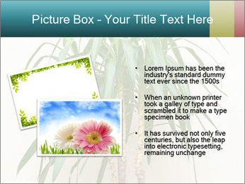Green houseplant PowerPoint Template - Slide 20
